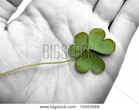 Clover In The Hand