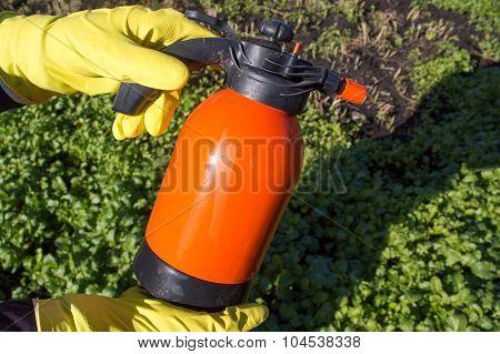 Protecting Plant From Vermin, Spring Garden Work. Hand Sprayer Garden.