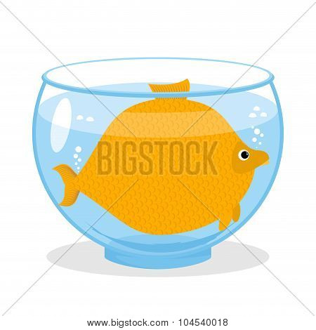Fat Fish In Aquarium. Fat Marine Animal. Big Goldfish.