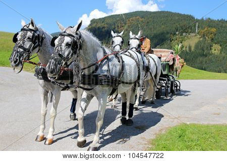 TYROL, AUSTRIA - SEPTEMBER 2014 : A rider and well decorated Lipizzan Horses with harness (Lipizzaner) standing on the path with mountain background in Tyrol, Austria on September 17, 2014