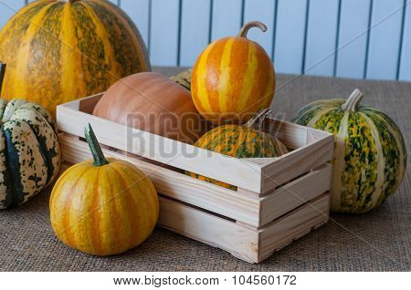 Set of different pumpkins in a wooden crate on white background