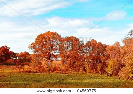 Autumn Rural Landscape With Red Trees