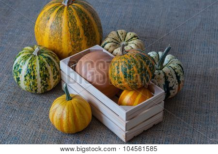 Autumn nature concept. Fall pumpkins in wooden crate on sackcloth rustic table. Thanksgiving dinner