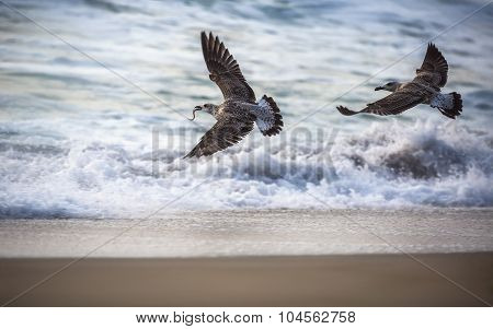 Flying Seagull Over The Blue Sea
