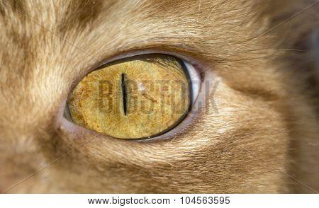 Close up image of cat's eye