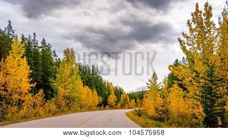 Autumn Colors in Jasper national Park