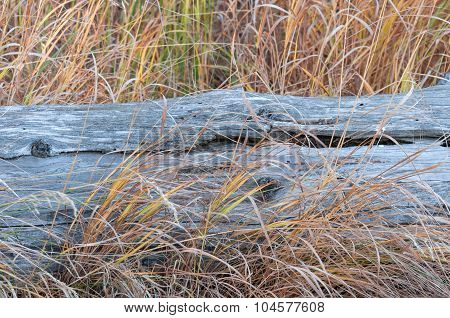 Log And Autumn Grasses