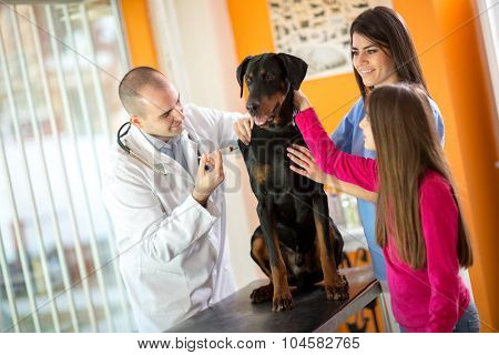 Beautiful Great Done dog in vet clinic receiving injection treatment by veterinarian