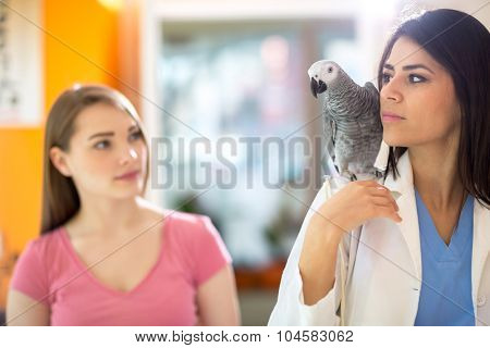 Sick parrot going with veterinarian to do exam in vet clinic