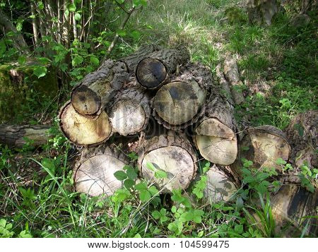 Log pile for wildlife