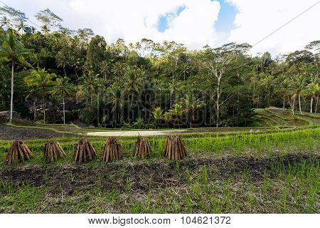 Rice Terraced Paddy Fields In Gunung Kawi