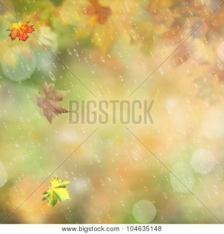 Autumnal rain in the forest abstract environmental backgrounds