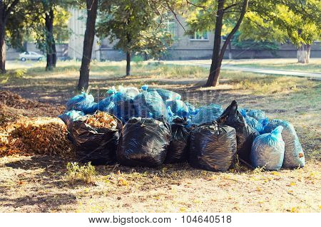 Many blue and black garbage bags with leaves on the ground