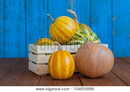 Pumpkins in a wooden crate on blue wood background