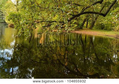 Old Oak Tree In Autumn Reflected In Water Park Pond