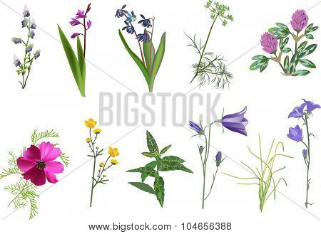 illustration with set of wildflowers collection isolated on white background