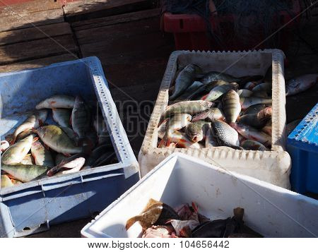 Boxes With Fresh Fishes