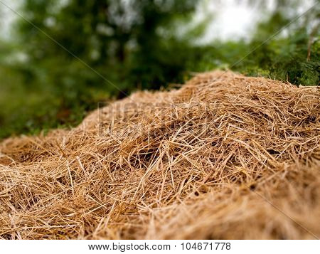 A Pile Of Dry Grass