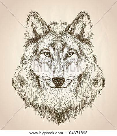 Vector sketch illustration of a wolf head front view, black and white vector wildlife design.