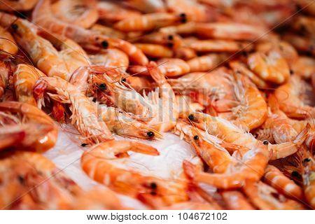 Fresh raw shrimps on display on ice on fishermen market store.