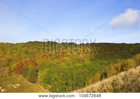 Colorful Forest In Autumn