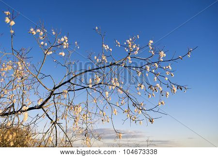 Willow Branch With A Furry Catkins Against The Blue Sky.