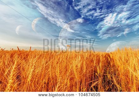 Wheat Ears And Cloudy Sky With Planets