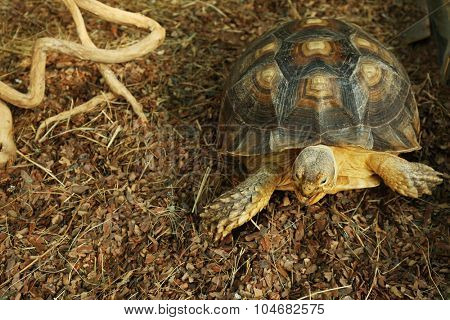 Turtle in zoo, close-up