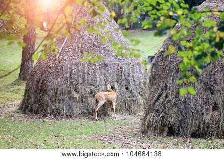 One Young Deer