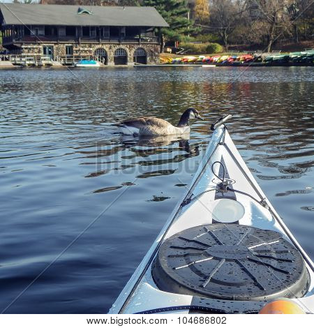 Kayak Surfer Meeting A Duck