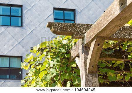 Vines On Wood Trellis