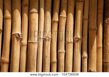 Bamboo Wall pattern. Bamboo is used around the world by humans for Housing, Furniture, Fences, Boats, Food, Decoration, Roofs and more. Bamboo is the fastest growing renewal resource in the world.