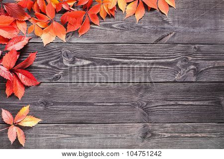 Wooden Background With Leaves Of Wild Grapes.