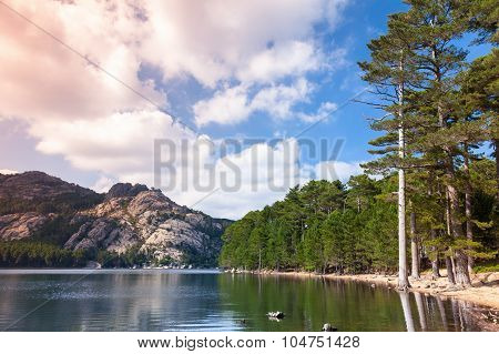 Landscape With Lake, Pine Trees And Mountains
