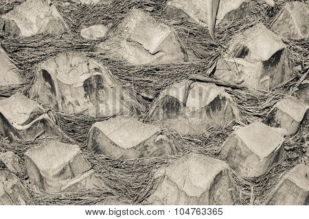 Abstract Texture Of A Palm Tree Bark Closeup