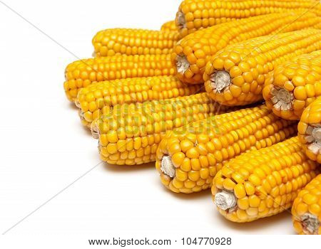 Mature Corn Close Up On A White Background