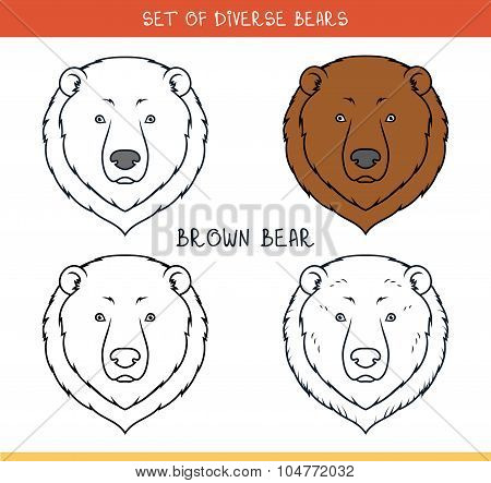 Brown grizzly bear. Set isolated face, heads bear in lines