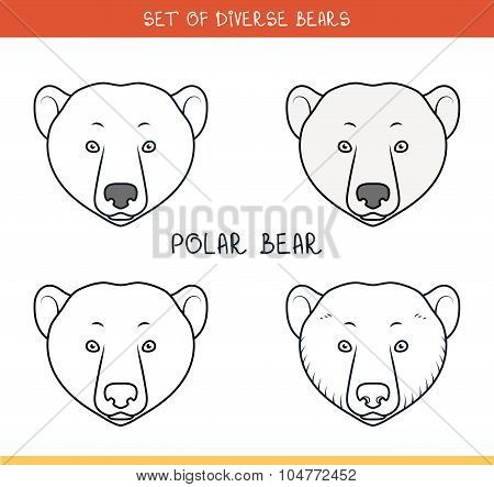 Polar bear. Set isolated face, heads bear in color, lines