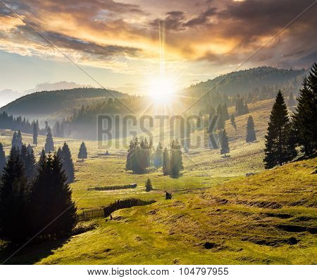 Fog On Forest In Mountains At Sunset