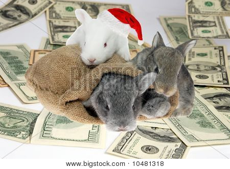 Rabbits In A Bag On American Dollar