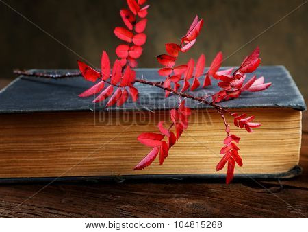 Still-life The Old Book And A Dogrose Branch
