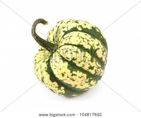 Green And Yellow Harlequin Pumpkin