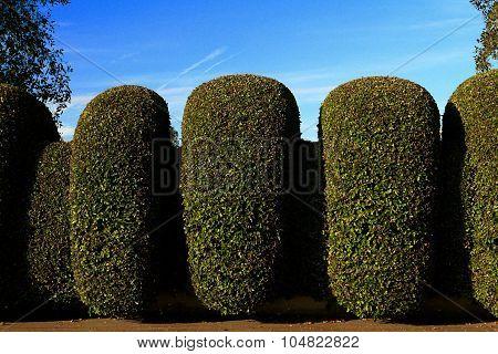 Exterior donut shape hedge wall