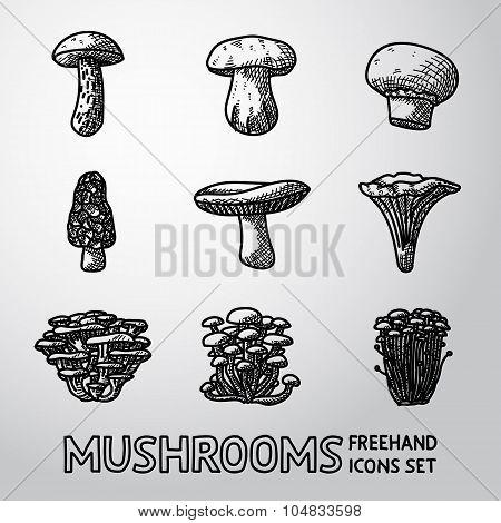 Set of freehand MUSHROOMS icons - porcini, champignon, morel, russule, chanterelle, oyster, honey ag