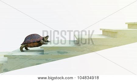 moving turtle wants to climb on the stairs concept backgroundmoving turtle wants to climb on the sta