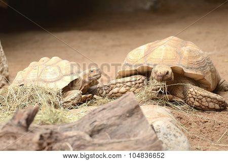 Turtles in Loro Park in Puerto de la Cruz on Tenerife, Canary Islands, Spain
