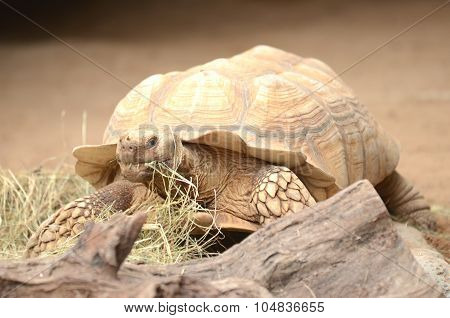 Turtle in Loro Park in Puerto de la Cruz on Tenerife, Canary Islands, Spain