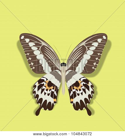 Realistic Illustration Papilio Gigon Butterfly