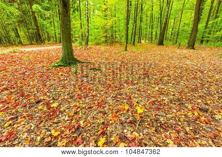 Autumnal Leaves On Ground