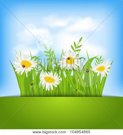 Spring nature background with camomiles, ladybugs, grass, blue s